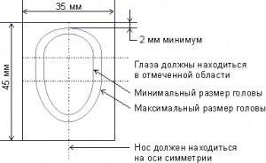 биометрическое фото (пропорции)